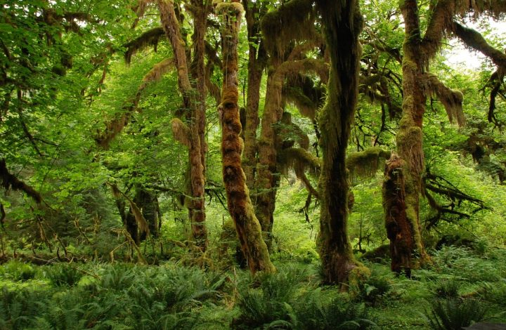 Science: Ancient Humans Altered Rainforest