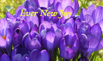 Ever New Joy