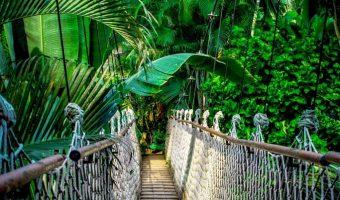 Amazonian Tribe Creates Encyclopedia of Indigenous Medicine