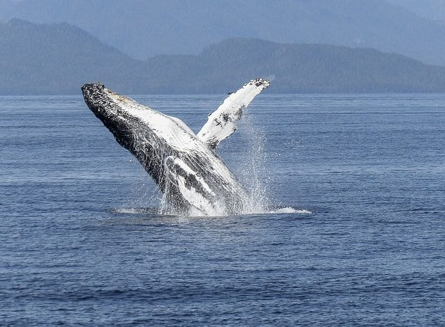Watch Whale's Thank You Dance